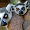 $7 for Two Passes to Capital of Texas Zoo