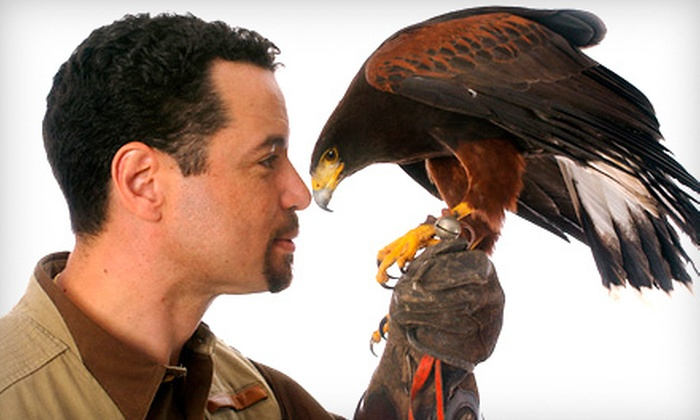 Mike Dupuy Falconry - Multiple Locations: $40 for a 90-Minute Falconry Demonstration at Mike Dupuy Falconry ($80 Value). Six Dates and Three Locations Available.