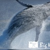 56% Off Whale-Watching Tour