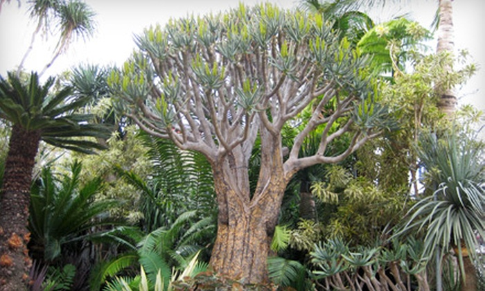 The Tropics - Melrose District,Hollywood: $50 for $100 Worth of Exotic Plants at The Tropics in West Hollywood