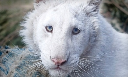 Conservators' Center: One Adult Ticket for an Enrichment Tour of Rescued Wildlife and One Matted Photo - Conservators' Center in Burlington