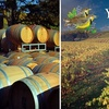 52% Off at Yamhill Valley Vineyards