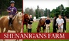 Shenanigans Farm - Addison: $29 for Two Private Horseback-Riding Lessons from Shenanigans Farm ($80 Value)