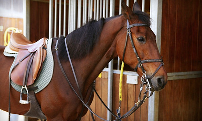 Celisse's School of the Equestrian Arts - Di Grado: Horseback-Riding Lessons at Celisse's School of the Equestrian Arts (Up to 51% Off). Three Options Available.