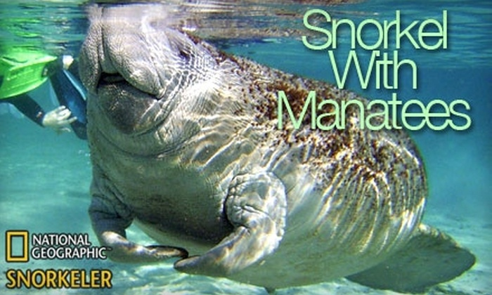 Snorkel with Manatees - Crystal River: Manatee or Dolphin Encounter from Snorkel with Manatees (Up to $49 Value). Choose Between Two Options.