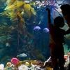 52% Off Aquarium Admission