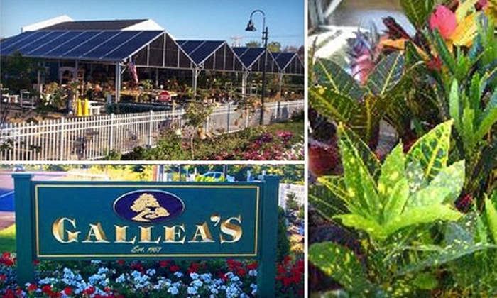Gallea's Tropical Greenhouse - Pittsford: $15 for $30 Worth of Perennials, Annuals, Trees, and More at Gallea's Tropical Greenhouse