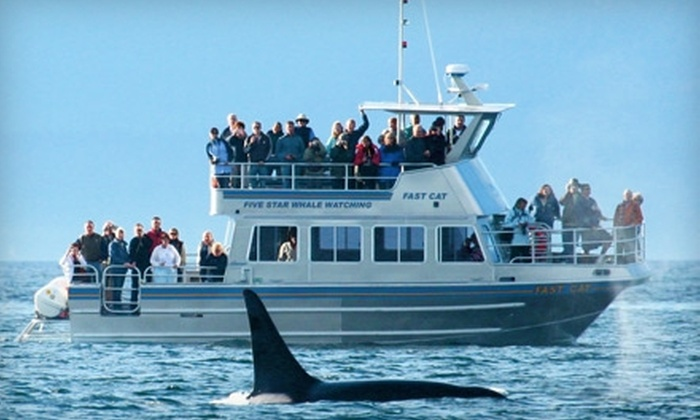 Five Star Whale Watching - Downtown: $55 for a Three-Hour Whale-Watching Excursion from Five Star Whale Watching (Up to $110.88 Value)