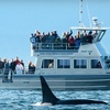 Up to Half Off Whale-Watching Trip