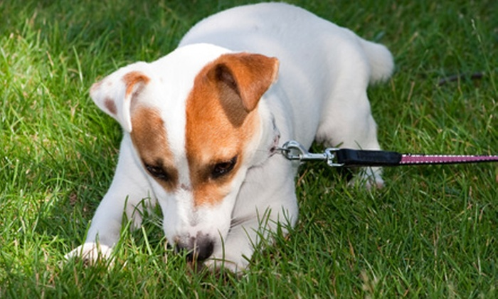 Doggy-Do - Oak Crest: $20 for Pet-Waste Removal from Doggy-Do (Up to $140 Value)