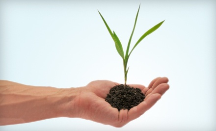 $20 Groupon to Sierra View Plant Nursery - Sierra View Plant Nursery in Modesto