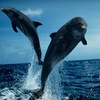 $9 for Island Tour from Sun Line Cruises