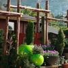 Half Off Plants & Gardening Items in Laguna Beach