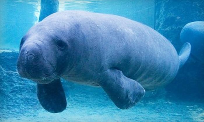8 For Admission To Mote Aquarium In Sarasota Mote