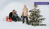 Premium-Nordmanntanne 1A, optional inkl. Weihnachtskugeln und Lichterkette, von Kaisertanne.de (bis zu 25% sparen*)