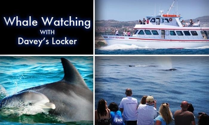 Davey's Locker Sportfishing - Newport Beach: $19 for Whale-Watching Ticket and Binoculars at Davey's Locker Whale Watching ($38 value)