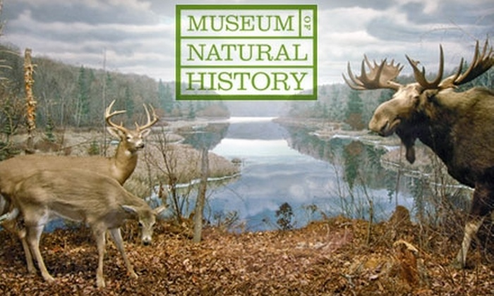 Nova Scotia Museum of Natural History - South End: Single or Family Admission at the Nova Scotia Museum of Natural History. Choose Between Two Options.