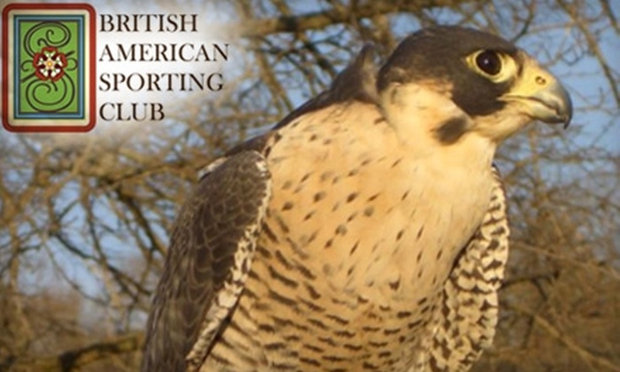 British American Sporting Club - Sharon: $20 for Intro to Freestyle Sporting Clays Class ($40 Value) or $60 for a Falconry Flight Show ($250 Value) at the British American Sporting Club in Crawfordville
