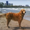52% Off Dog Walking from Divine Canine