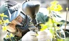 Midway Paintball - Hartley: $25 for All-Day Entry, Equipment, Air, and 200 Paintballs at Midway Paintball Facility in Vacaville ($50 Value)