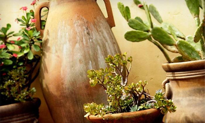 Jackson's Greenhouse & Garden Center - North Topeka West: $10 for $20 Worth of Cacti and Succulents at Jackson's Greenhouse & Garden Center