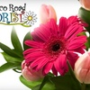 53% Off Flower Club at Mexico Road in St. Peters
