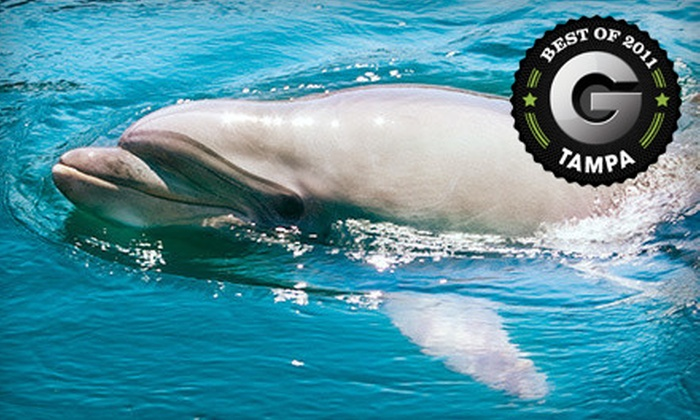 The Tropics Boat Tours - Dunedin: Dolphin Exploration or Sunset Celebration Tour for One Adult or Child from The Tropics Boat Tours in Clearwater (Up to Half Off)