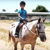 Half Off Horseback-Riding Summer Camp in Gilroy