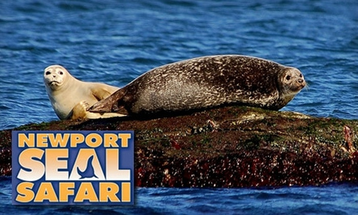 Oldport Marine Services - Providence: $8 for a One-Hour Seal Safari Cruise Around Newport Harbor and Narragansett Bay from Oldport Marine Services
