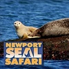 $8 for Newport Seal Safari Cruise