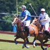 One-Hour Small-Group Polo Lesson in Essa
