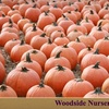 $6 for Admission to Woodside Nursery