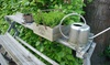 Stainless Steel Watering Cans (1.1 or 1.6 L)