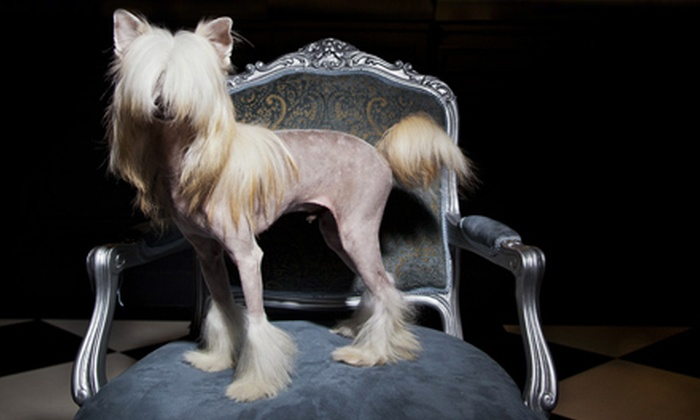 Shaggy Chic - Las Vegas: Dog Grooming for a Small, Medium, or Large Dog at Shaggy Chic (51% Off)