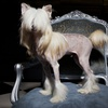 51% Off Dog Grooming at Shaggy Chic