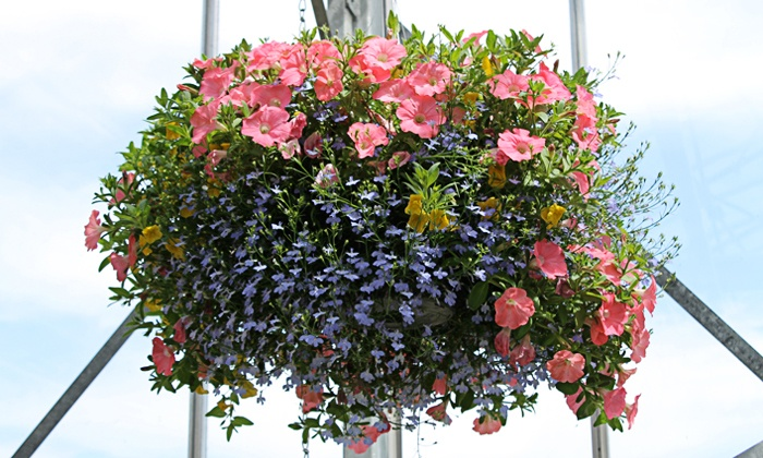 Wilson Farms - East Lexington: $24.99 for One 10-Inch Hanging Floral Basket at Wilson Farms ($34.99 Value)
