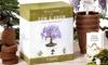 Nature's Blossom Bonsai Garden Indoor Seed Starter Kit (4-Pack)