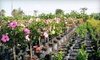 Oasis of Port St. Lucie - West St. Lucie: $25 for $50 Worth of Plants and Garden Accessories at Oasis of Port St. Lucie