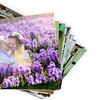Fino a 400 foto su carta Fuji