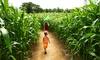 51% Off Admission to Corn Maze at Marini Farm
