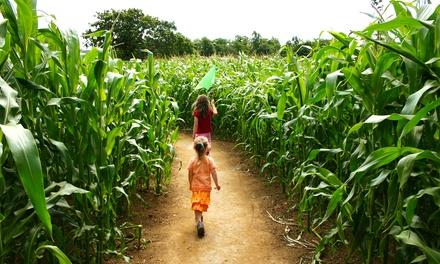 Daytime or Flashlight Night Corn Maze Admission at Marini Farm (Up to 53% Off). Three Options Available.