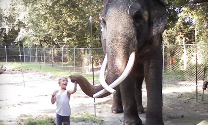 Two Tails Ranch - Raleigh: Tour of Elephant-and-Exotic-Animal Sanctuary for Two or Four at Two Tails Ranch in Williston