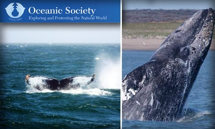 Oceanic Society Whale Watching - San Francisco: $30 for a Three-Hour Half Moon Bay Sunday Whale-Watching Tour with The Oceanic Society