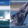 $30 for Whale-Watching Tour