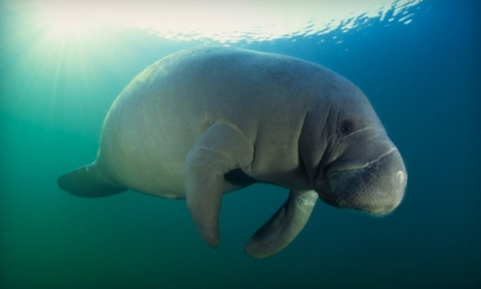 Double R's Fishing and Tours Company - Naples: $17 for One Child Ticket or $27 for One Adult Ticket to a Manatee Tour at Double R's Fishing and Tours Company (Up to $55 Value)