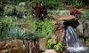 $10 Maleny Botanic Gardens Entry