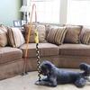 Indoor Tethered Tug-of-War Dog Toy