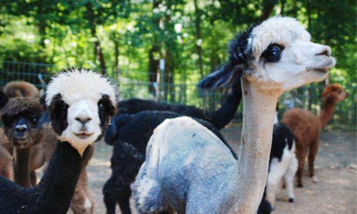 Happy Hills Alpaca Farm - Monroe: Farm Tour and Picnic Lunch for a Child or Adult at Happy Hills Alpaca Farm (Half Off)