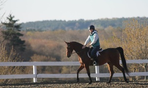 Reevedale Farm: 30- or 60-Minute Private Horseback-Riding Lessons at Reevedale Farm (Up to 67% Off)