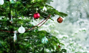 Up to 30% Off Christmas Trees at Mr. Jingle's Christmas Trees at Mr. Jingle's Christmas Trees, plus 6.0% Cash Back from Ebates.